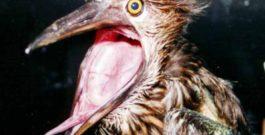 Herons maatje te klein voor de Reserve Reserves